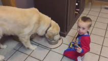 小主人抢喝狗狗的水,狗狗急的又不敢揍他!