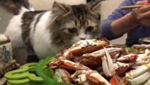 这么多螃蟹舍不得给我一个 你们的良心不疼吗