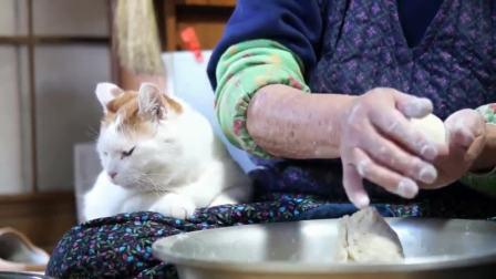 猫咪看奶奶做豆包一脸嫌弃: 为什么没有肉没有鱼