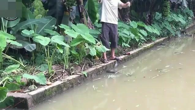 农村3岁小男孩和老爸在池塘钓鱼,生活惬意