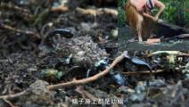 德哥发现蜜蜂窝,翻开石头吓一了跳,不仅有蛇还有吓人的毒蝎!