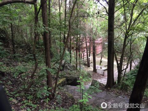 微信头像树林风景 片