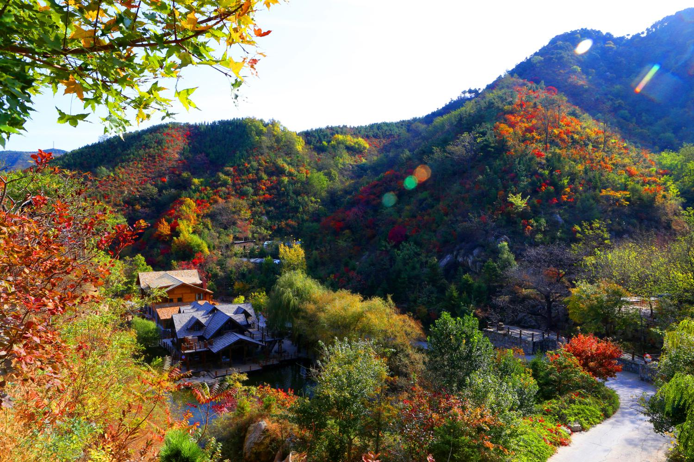 色彩风景柳条临摹
