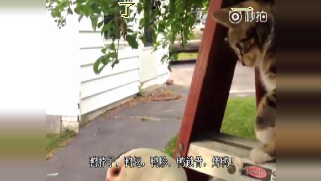 当小动物会说北京话,一定要看到第三个!哈哈哈哈哈嗝!