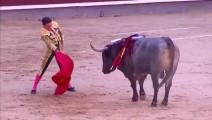 西班牙斗牛,看看这个斗牛士一剑刺入牛背的时候有多准