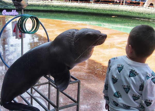 小孩子对动物的感情都是带着又爱又怕的懵懂,但动物往往用最单纯直