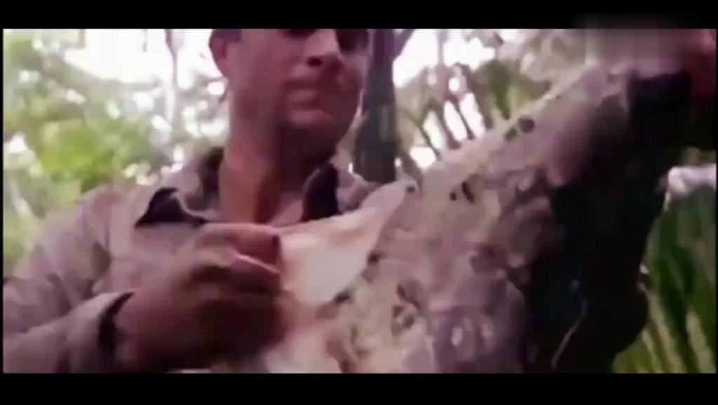 荒野美食: 贝爷在森林发现3米长的家伙,吃完这顿可以饿3天