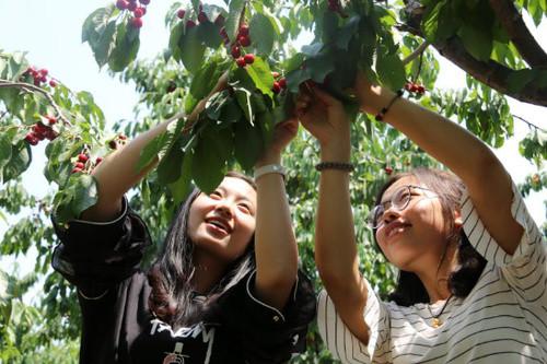 苹果树下农乐园图片