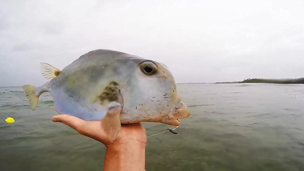 钓鱼钓了一条奇葩的河豚鱼,长得很欠抽