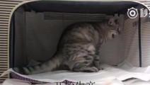 厉害了我的猫,看看猫咪生产过程,每个母亲都是伟大的