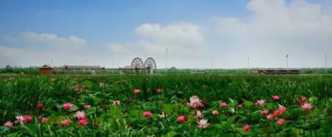 ▼▼▼ 地址:泗洪县城头乡 洪泽湖湿地公园,国家aaaa级旅游景区,中国