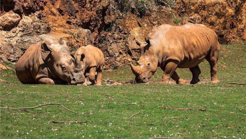 壁纸 动物 牛 犀牛 野生动物 1024_578