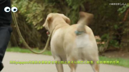 """给狗狗挂1个""""袋子"""",彻底解决宠物随地大小便,邻居都在夸"""