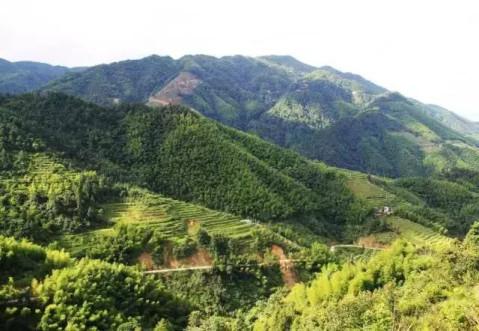 位于湖南省炎陵县策源乡梨树洲风景区的东南,湘赣两省分界处,山姿雄伟