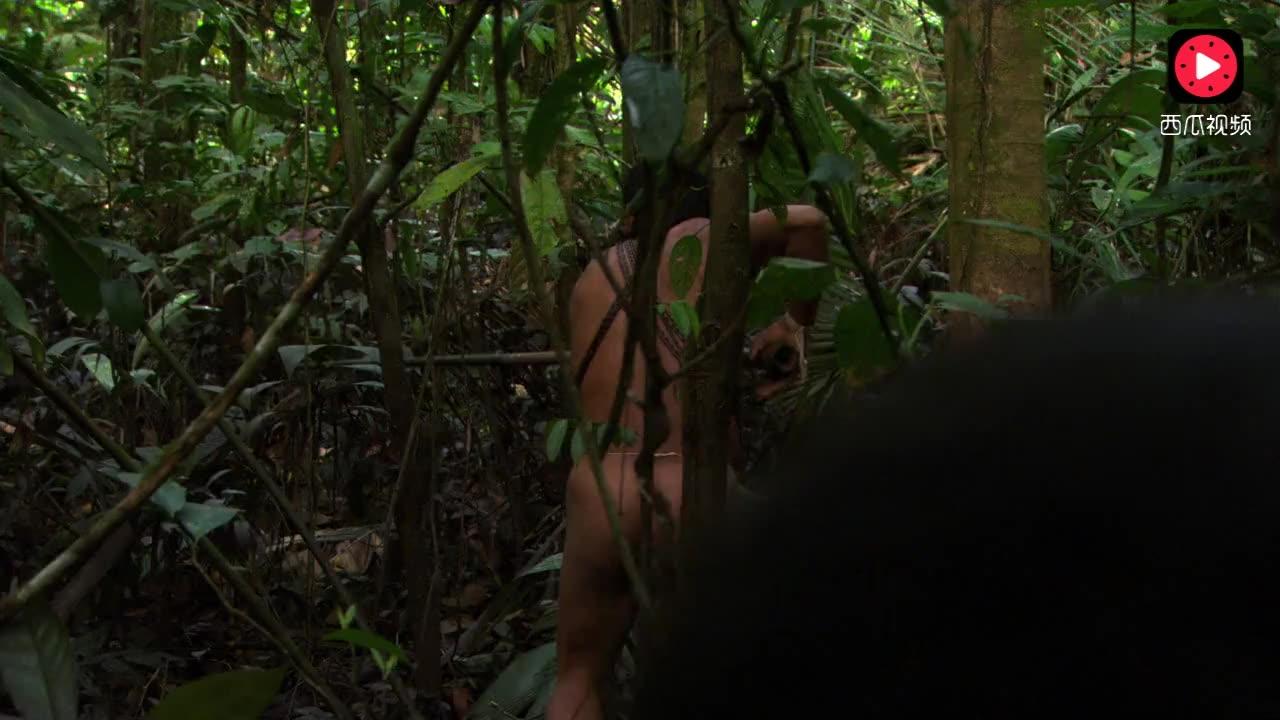亚马逊雨林里的原始人,男女老幼一起打猎,钻木取火做毒箭