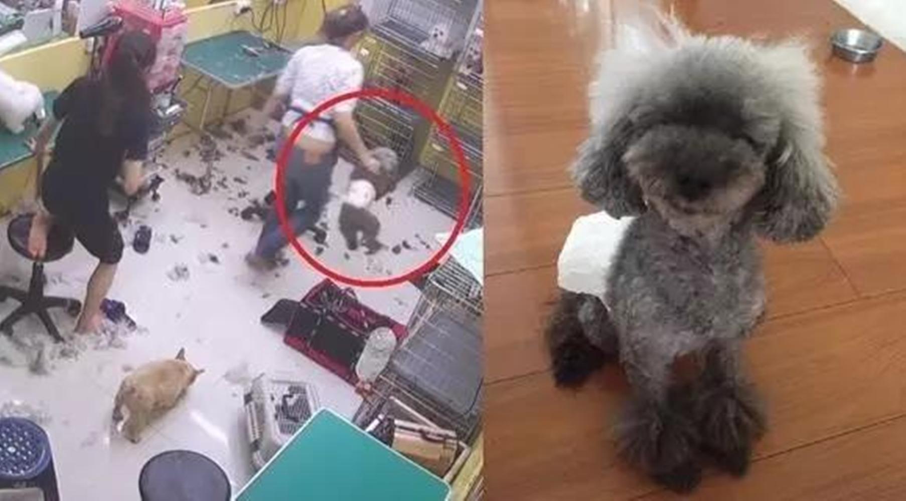 铲屎官们, 带狗狗去宠物店美容也需要谨慎了!