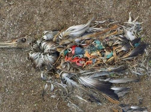 直击环境污染对动物造成触目惊心伤害的画面