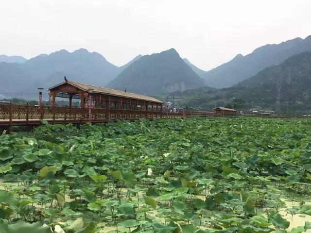 自然生态 乐清淡溪荷花博览园位于淡溪镇梅溪村,是梅溪村着力打造的