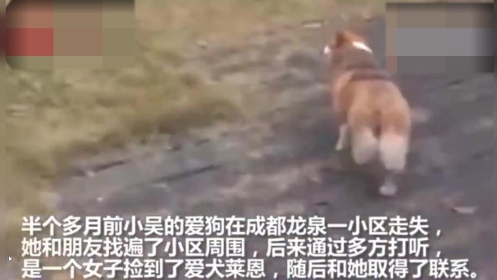 心爱狗狗走失,疑被捡狗人士恶意摔死!痛恨,你不爱它,也请不要伤害它!