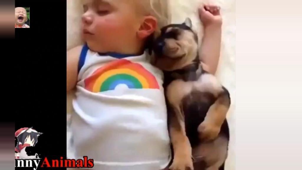 小宝宝跟狗狗一起睡,画面太美,让人感动