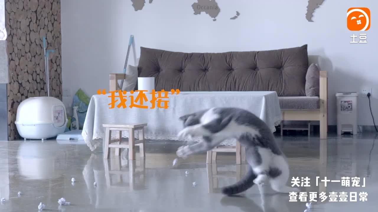 铲屎官陪猫咪玩扔纸团游戏, 证实猫咪是水做的!