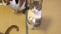 佛系小猫,两个小爪子一直拜,老夫的少女心都被萌化了