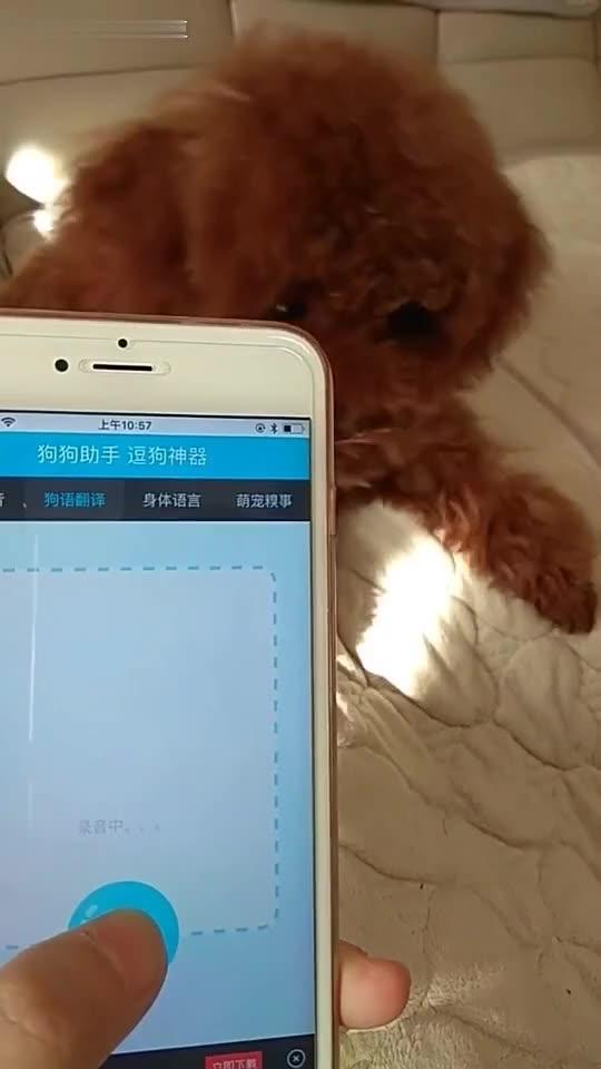 汪星人#狗语翻译器哈哈哈哈