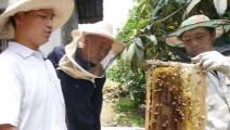 为什么在防土蜂飞逃之后要加入虫卵脾?