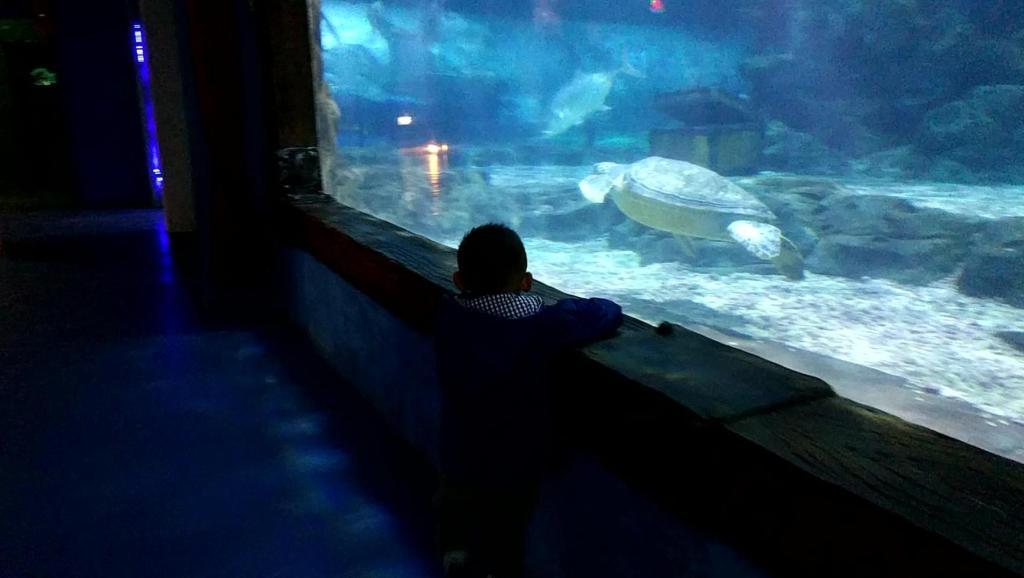 动物世界海底隧道海鱼搞笑视频2018晨晨的玩具
