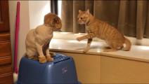 剃完毛以后,另一只猫不认识了!你是谁?你从哪里来?