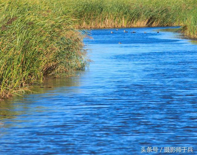 原始之美-绥化肇东千鹤岛湿地公园