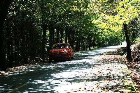 刚刚入秋,路边的梧桐树叶便迫不及待的纷纷飘落,地上是窸窸窣窣的落