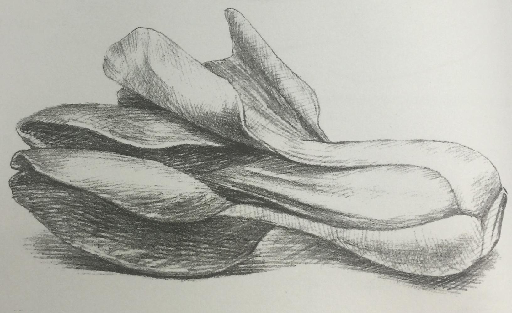 蔬菜静物写生 油菜的绘制技巧详细步骤