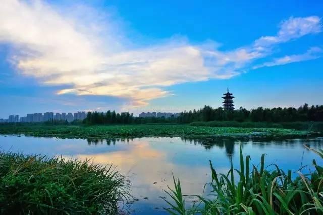 """长沙洋湖湿地水利风景区城市中的一颗""""绿芯"""""""