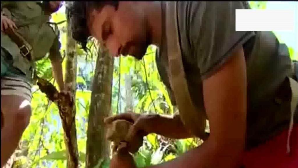 荒野求生: 不愧是贝爷带的徒弟,徒手捉到一条鳄鱼