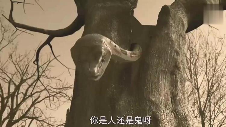 千年古树里藏着一条巨蟒,会说人话,张口闭口要杀人