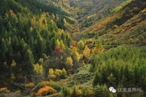 朔州西山一带,特别是利民镇周边的大山,一到秋天就红红火火披上了新