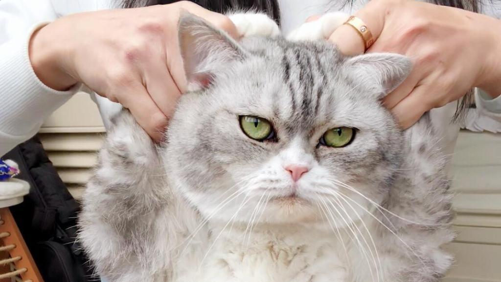 九只猫咪比爱心,每只都是爱你的模样,最后那只最可爱!