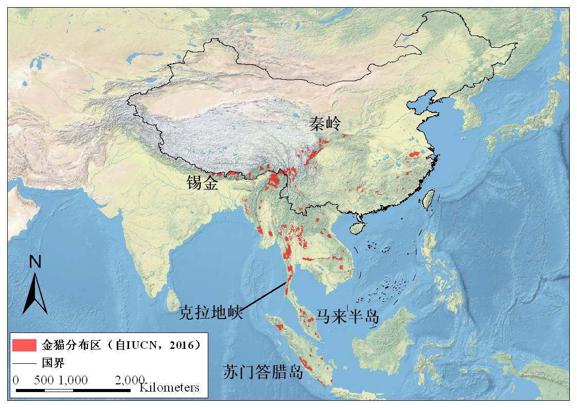 这种中国本土猫科动物, 全世界动物园只剩50只