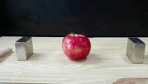小实验: 两个磁铁能夹爆苹果吗?结果有点尴尬