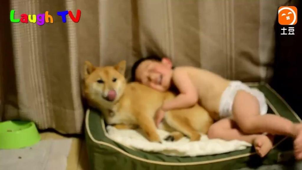 小宝宝和柴犬抢地方睡!狗狗的反应让人哭笑不得