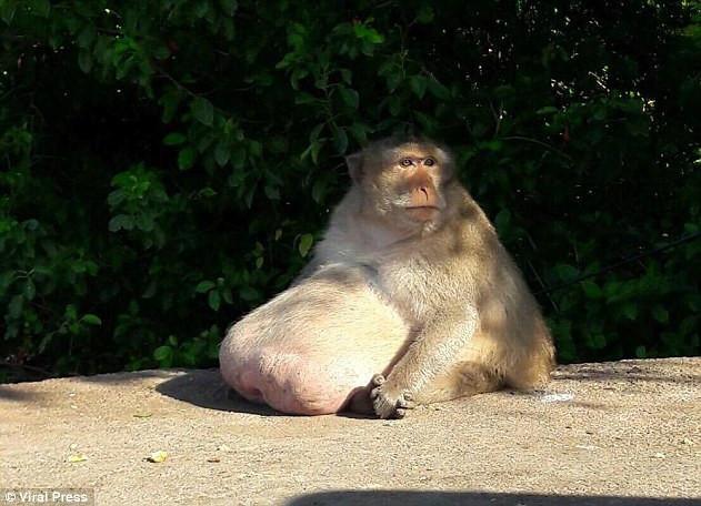 野生动物管理局的发言人kachaphukem说