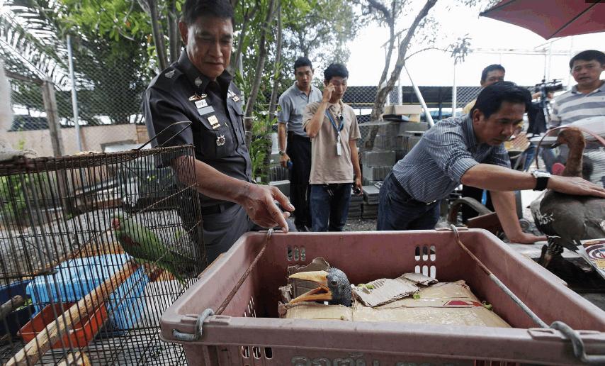 镜头下: 东南亚农贸市场上被人肆意交易的动物