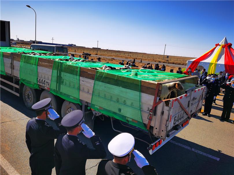 中蒙舉行蒙古向中國捐贈羊交接儀式-圖6