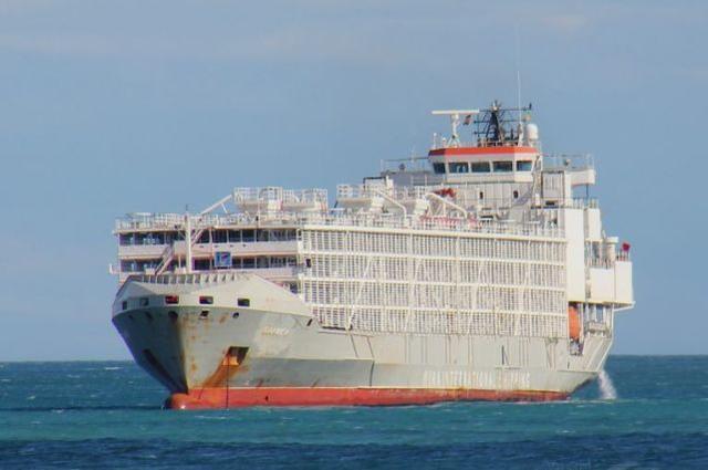 日媒: 駛向中國的貨船在東海失蹤, 載有43名船員和5800頭牛-圖1
