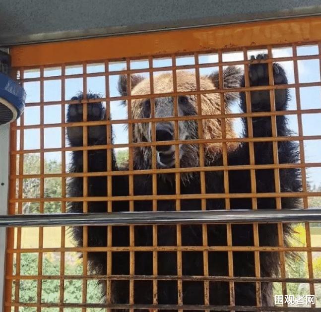 太可惜! 上海被熊咬身亡的飼養員是個拆遷戶 網友:可能是獨生子-圖5