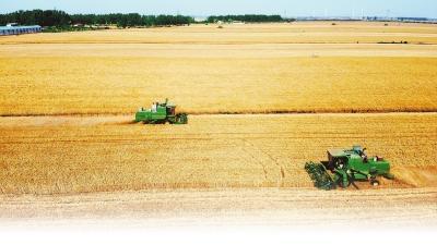 [三農]豐收!河南夏糧總產量760.64億斤-圖1