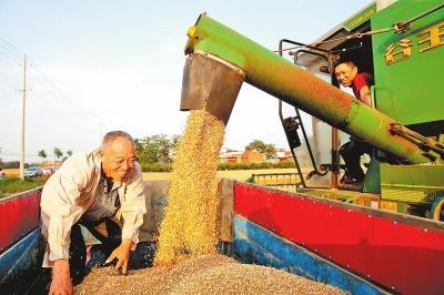 [三農]豐收!河南夏糧總產量760.64億斤-圖2