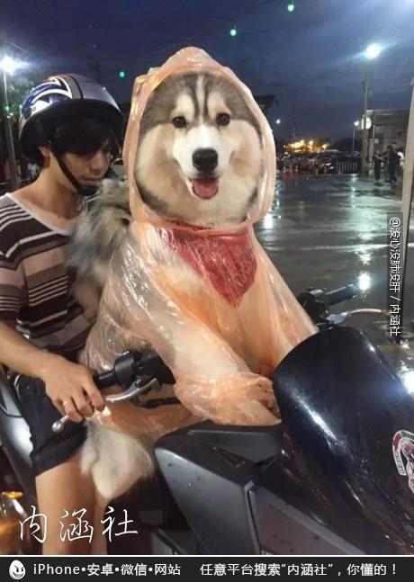 泰国有主银载着汪星人去兜风的时候下雨了, 主银就把自己的雨衣帮它穿上了, 真爱啊!