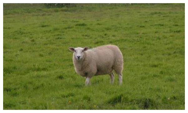 """羊羊羊羊羊: 10月28會發生""""地動山搖""""的大事件, 看看是怎麼回事-圖2"""
